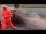 Огромный мертвый кит переполнен различными газами